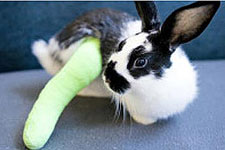 chase_bank_community_giving_bunny_broken_leg
