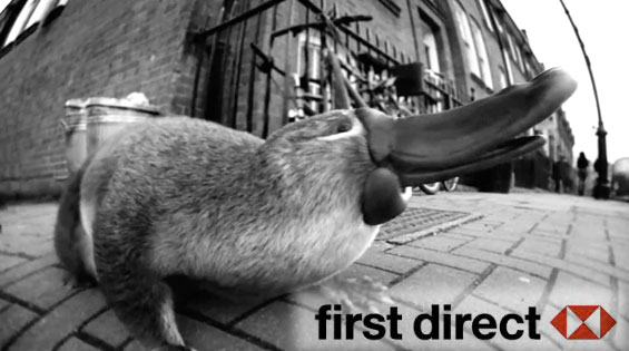 first direct is the platypus of banking