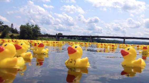 service_1st_credit_union_duck_derby_race