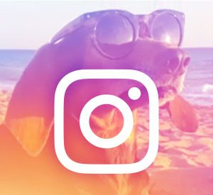 Article Image: Instagram Campaigns Seek Emotional Connections for Banking Brands