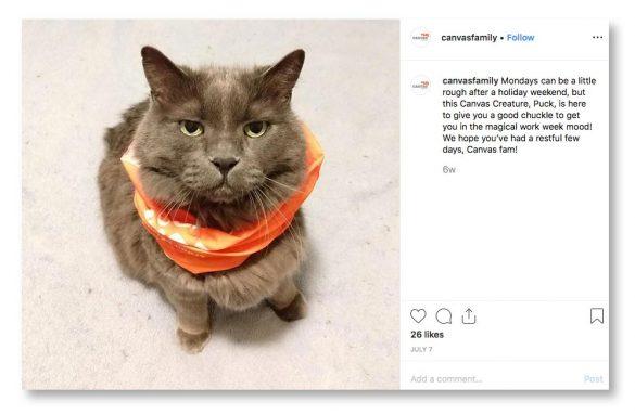 unhappy cat instagram