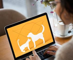 Article Image: Bank Website Personality Test: Is Your Site a Dog or a Cat?