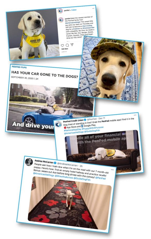 PenFed cute credit union dogs