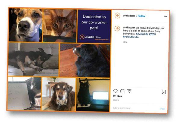 Avidia co-worker pets