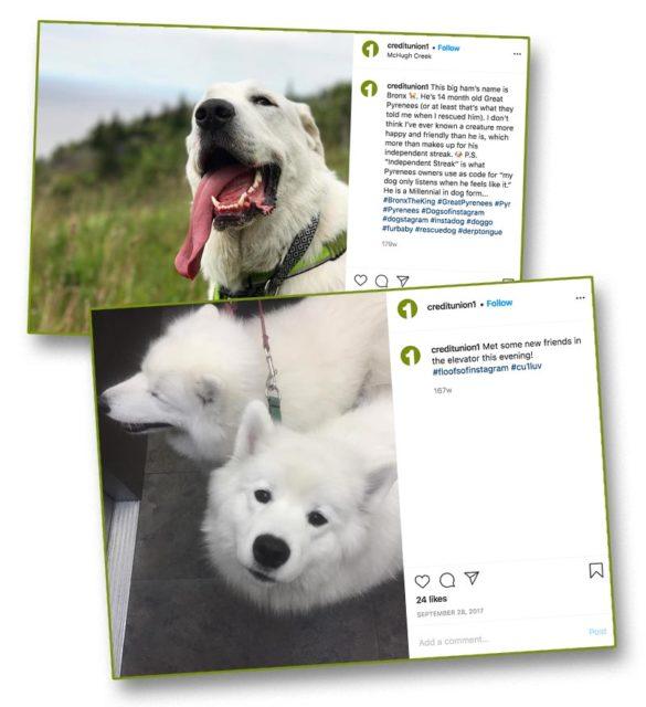 White fun dogs CreditUnion1