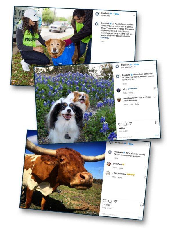 One is a cow Frostbank dogs