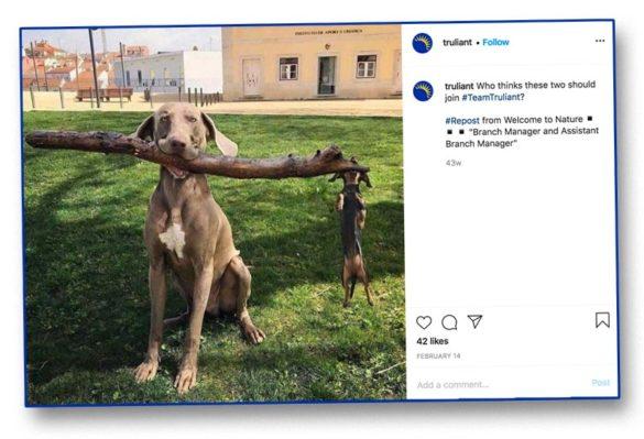 Big small dog huge stick Truliant
